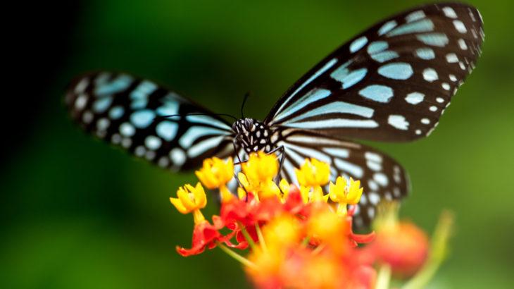 ミツたっぷりの花には蝶がやってきます「女子力アップ♡」