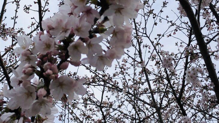 体験会in魂と心のお茶室(姫路)