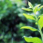 雨が♪「産まれる前から幸せ」