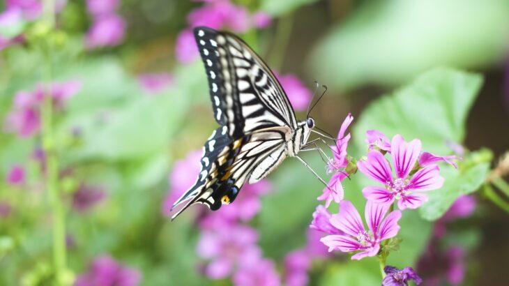 「花に蝶」パートナーとの関係、お互いの繁栄がありますか?