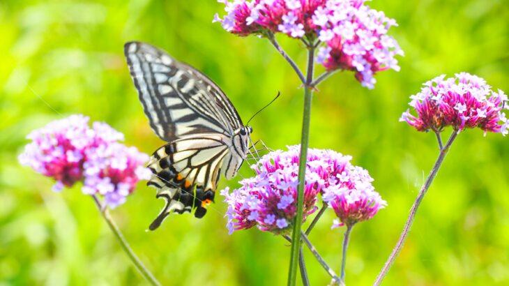 一番見ているのは自分「花に蝶」