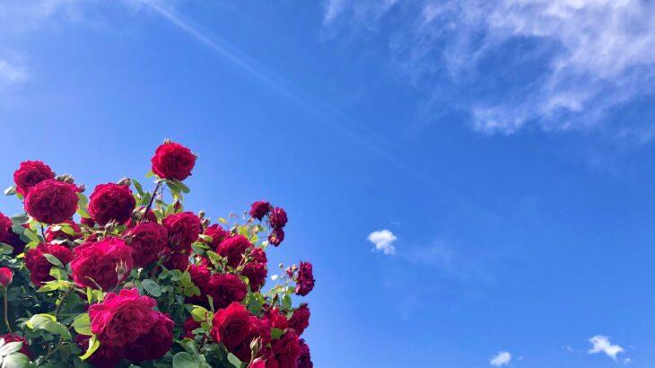 幸せに向かって超プラスへ♪ 体験in姫路(女性限定♡)